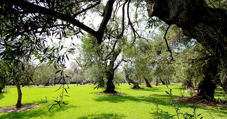 parque_bosque_el-_olivar_san_isidro_lima_perou